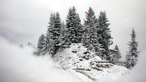 Деревья снежка и сосенки Стоковые Фото