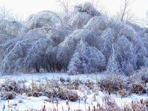 Деревья согнули льдом в зиме после шторма льда Стоковое Изображение RF