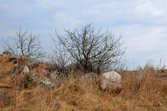 Деревья среди камней в поле в предыдущей весне Стоковое Изображение RF