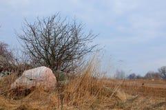 Деревья среди камней в поле в предыдущей весне Стоковое Фото