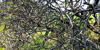 Деревья стержни которых походят корни стоковое изображение rf