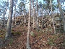 Деревья стороны холма Стоковые Фото
