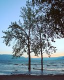 Деревья стоя в воде с предпосылкой неба захода солнца Стоковая Фотография