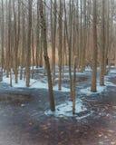 Деревья стоя в замороженной воде стоковое изображение