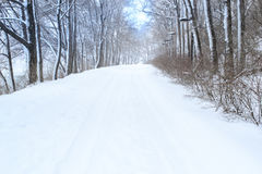 Деревья с зимой предпосылки снега Стоковые Изображения