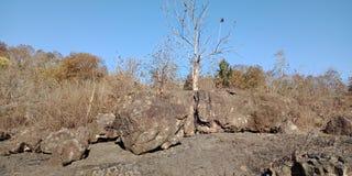 Деревья с ландшафтами природы горы, Lakhnadon Индией, сфотографированный в феврале 2018, благоустраивают предпосылку Стоковое фото RF
