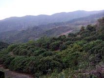 Деревья с миром стоковая фотография rf