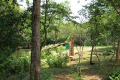 Деревья сломали сильным ветером, шторм сломали большую березу стоковое фото rf
