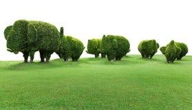 Деревья слона с зеленой травой на белой предпосылке Стоковые Изображения