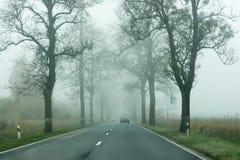 Деревья с упаденными листьями вдоль дороги Стоковые Изображения