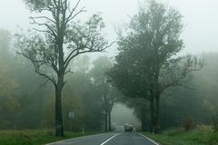 Деревья с упаденными листьями вдоль дороги Стоковые Фото
