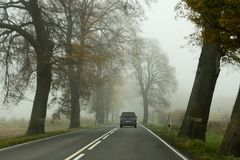 Деревья с упаденными листьями вдоль дороги Стоковые Изображения RF
