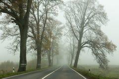 Деревья с упаденными листьями вдоль дороги Стоковое Фото