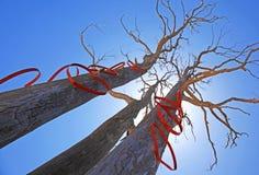 Деревья с формами сердца в солнце Стоковые Изображения