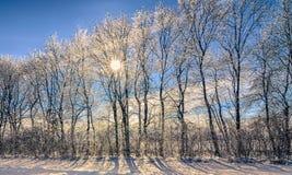 Деревья Сrystal Стоковое Фото