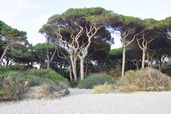 Деревья танцев Стоковая Фотография RF