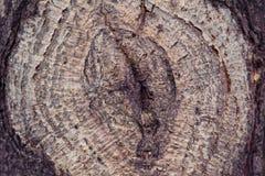 Деревья текстуры ретро Стоковое фото RF