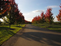 Деревья, трава и дорога осени около австралийской винодельни Стоковая Фотография RF