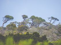 Деревья тропического леса стоковые изображения