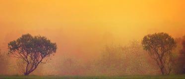 Деревья увиденные в золотом рассвете Стоковое фото RF