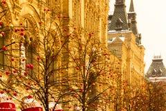 Деревья украшенные с гирляндами Стоковые Фотографии RF
