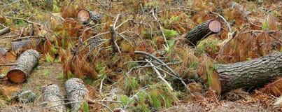 Деревья упали после прохода торнадо Стоковые Изображения RF