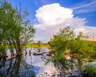 Деревья упали в реку Стоковая Фотография