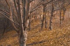 Деревья фантазии в лесе в падении на зоре Стоковая Фотография RF