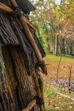Деревья хижины и падения коренного американца стоковая фотография