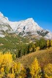 Деревья цвета осени в скалистых горах Стоковое Изображение