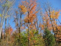 Деревья цвета падения стоковое изображение rf