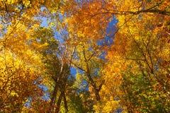 Деревья цвета Стоковые Изображения