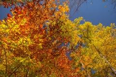 Деревья цвета Стоковое Фото