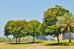 Деревья цветения в полдень стоковые фотографии rf