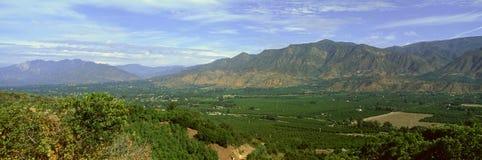 Деревья цитруса, долина Ojai, Калифорния Стоковое Изображение