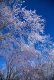 Деревья 2 льда Стоковое Фото
