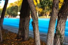 Деревья ‹â€ ‹â€ города Стоковые Изображения RF
