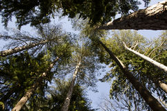 Деревья Стоковая Фотография