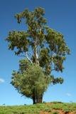 Деревья 1568 Стоковые Фото