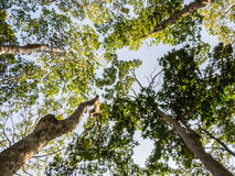 Деревья стоковые изображения