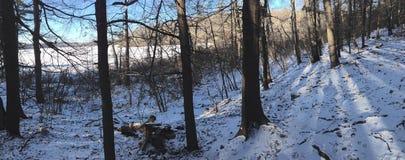 Деревья Стоковое Изображение RF