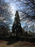 Деревья стоковое фото rf