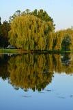 Деревья Стоковые Фотографии RF