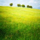 Деревья 110 Стоковое Фото