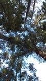Деревья Стоковые Изображения RF