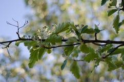 Деревья 3 Стоковые Фотографии RF