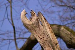 Деревья 5 Стоковые Изображения