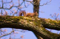 Деревья 7 Стоковые Фото