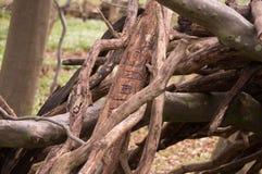 Деревья 9 Стоковые Изображения RF