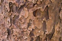 Деревья 12 Стоковое Изображение
